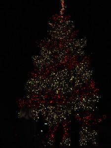 DSC001121 225x300 Longwood Gardens: Christmas Lights Display