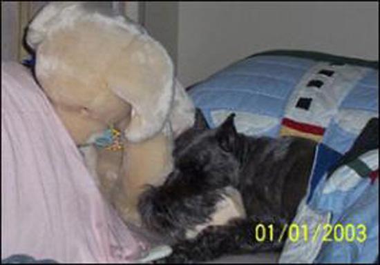 rainaurn 282x197 Teddy Bear Urns.......?