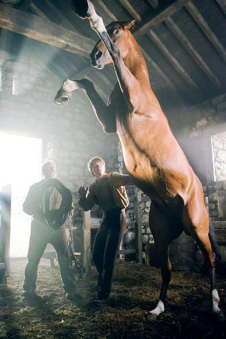 horse05 Blu ray Review: War Horse